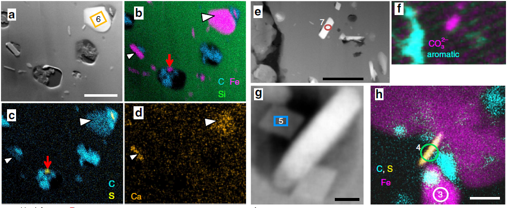 Study On Iron Minerals within Specific Microfossil Morphospecies Image